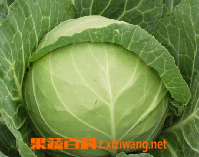 果蔬百科包菜怎么做好吃
